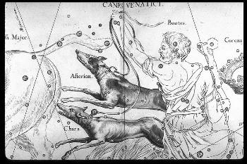 El perro y sus orígenes como mascota