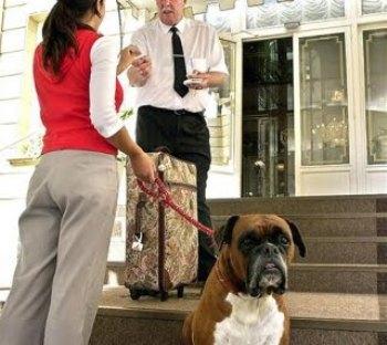 Se pueden alojar mascotas en los hoteles