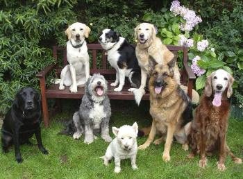 Características del Perro Doméstico