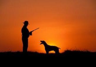 Razas de perros de Madriguera