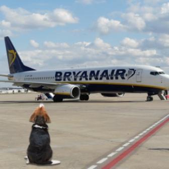 Que tener en cuenta para viajar en Avión con una Mascota