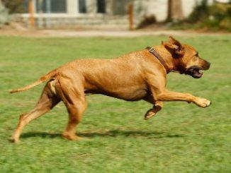Mecánica del Movimiento de Traslación del perro