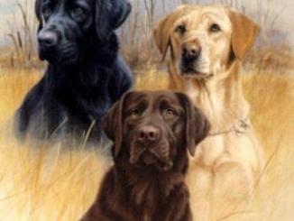 Clases de Perros Cazadores