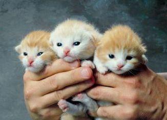 Como Adoptar un Gato