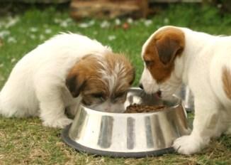 Como Alimentar un Cachorro