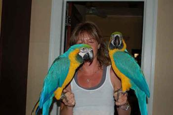 Pájaros Domésticos Aves Domésticas