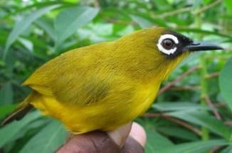 Características de los Pájaros Tropicales