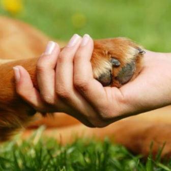 foto de abandono y adopcion de animales