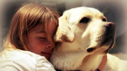 Foto de Como Cuidar un Perro Labrador - Consejos