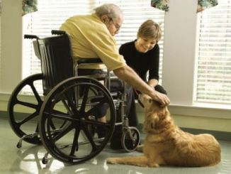 Foto de El Perro como Terapia para Pacientes con Alzheimer