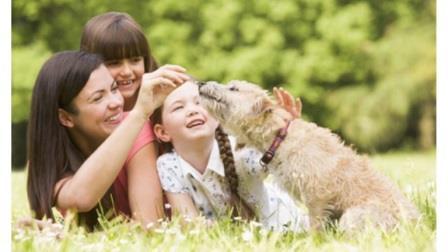 Foto de La mascota ideal para la familia