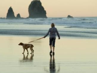Foto de Tu perro necesita que lo pasees