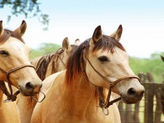 caballos nuticion