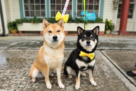 Que Significa la Cinta Amarilla en los Perros