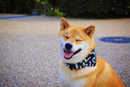 Foto de Mascotas famosas de internet