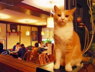 Foto de bar para gatos