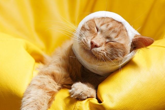 primeros auxilios para mascotas 1