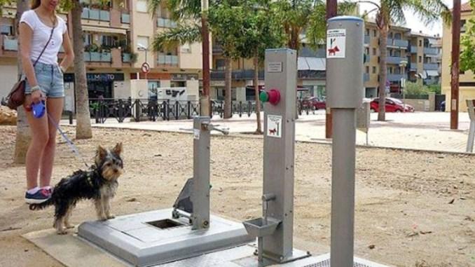 baño público para perros en España