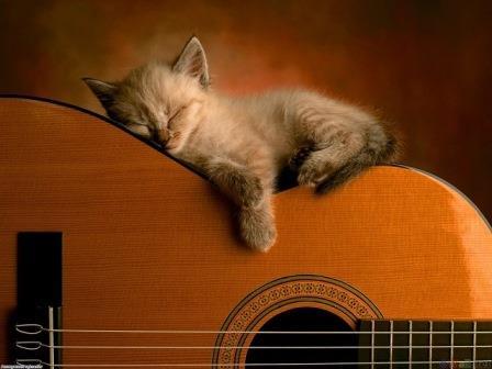 Foto de cuantas horas duerme un gato al dia