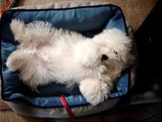 Foto de Beneficios de esterilizar una mascota