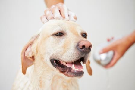 El uso de cosméticos en los Perros