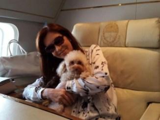 Argentina incorpora el transporte aéreo de mascotas