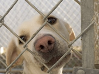 Por qué es mejor adoptar una mascota