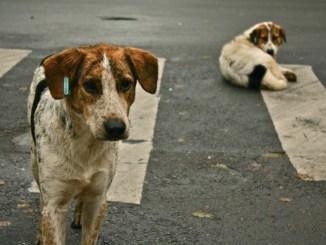 Por qué abandonamos a nuestras mascotas