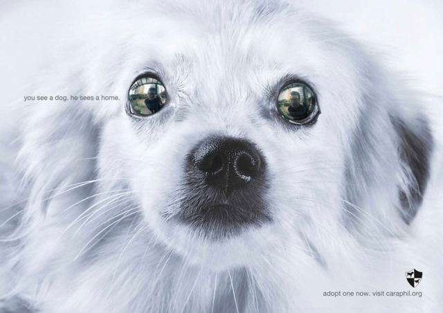 """""""Tú ves un perro. Él ve un hogar."""""""