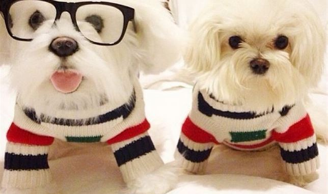 Los peluches de mascotas más reales