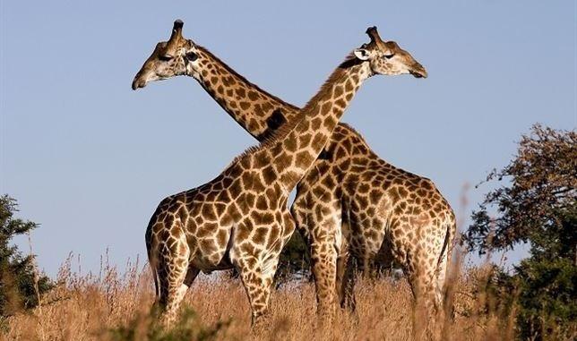Cómo es el amor en el reino animal