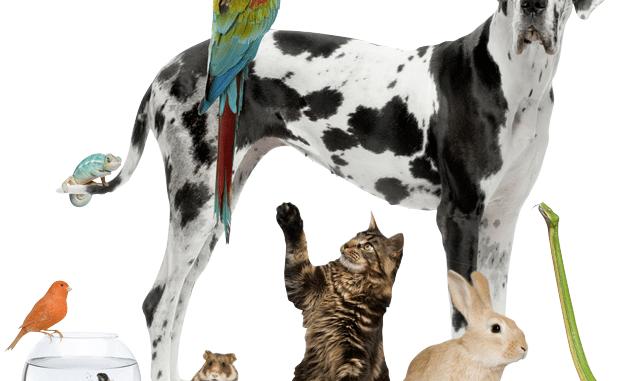 La vida media de las mascotas domésticas