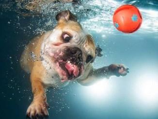 30 Impresionantes fotos de perros bajo el agua
