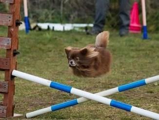 18 fotos de perros captados infraganti