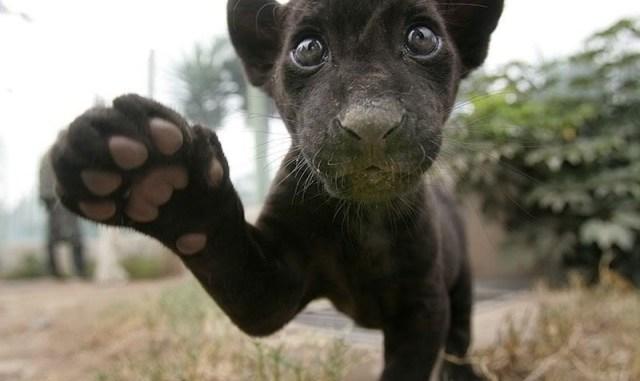 Por qué en Argentina se festeja 2 veces el Día del Animal