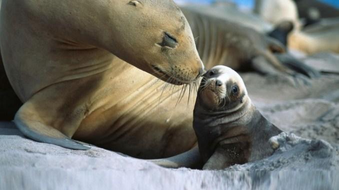 La hermosa relación de padres e hijos en el reino animal