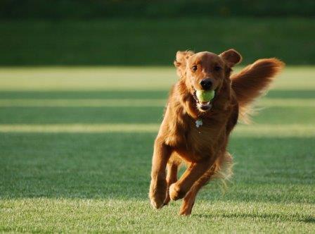 foto de adiestrador de perros excelente