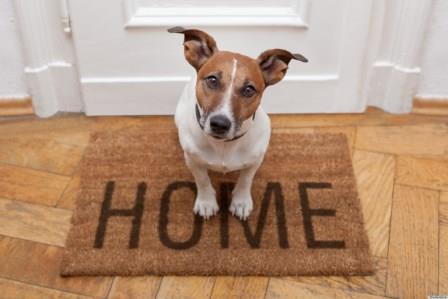 mascota en casa