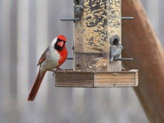 Aprende a construir comederos para pájaros