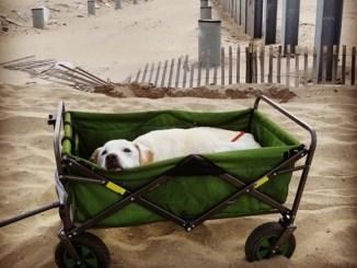 Hombre lleva de viaje por todo el país a su perro con enfermedad terminal