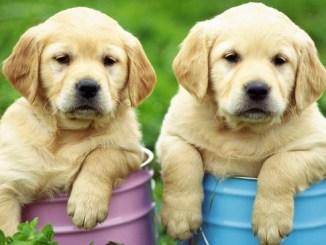 Los perros se parecen a nosotros más de lo que pensábamos