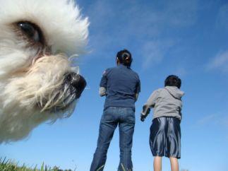 Perro Gigante 08