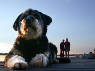 Perro Gigante 09
