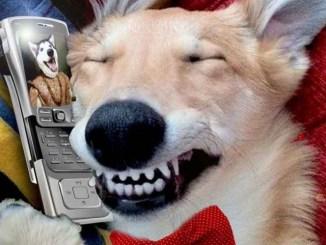 20 mensajes de texto que tu mascota enviaría si pudiera escribir