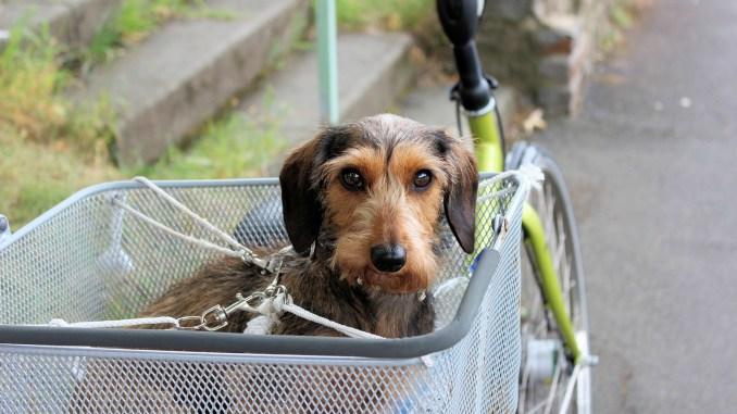 Información a tener en cuenta antes de adoptar una mascota