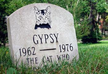 Cinco consejos para poder sobrellevar la pérdida de una mascota