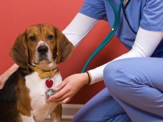 Qué es el Parvovirus Canino y Cómo se Contrae