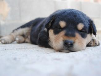 Consejos para comprar una mascota de manera legal