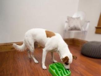 enfermedades caninas que puedes prevenir por medio de la misma