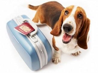 Consejos para viajar con las mascotas